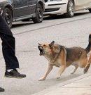 Perros salvajes en los parques empresariales